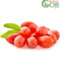 Proprietatile fructului Goji